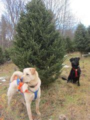 getting tree 1