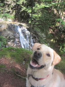 Cascade trails mean water! Happy dog!
