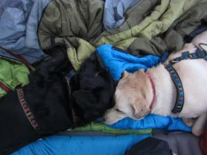 The dogs slept through most of the rain..at least we had no thunder and lightning!