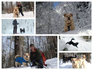 snowshoe collage 2015