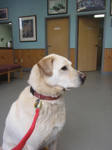red leash at vet 1