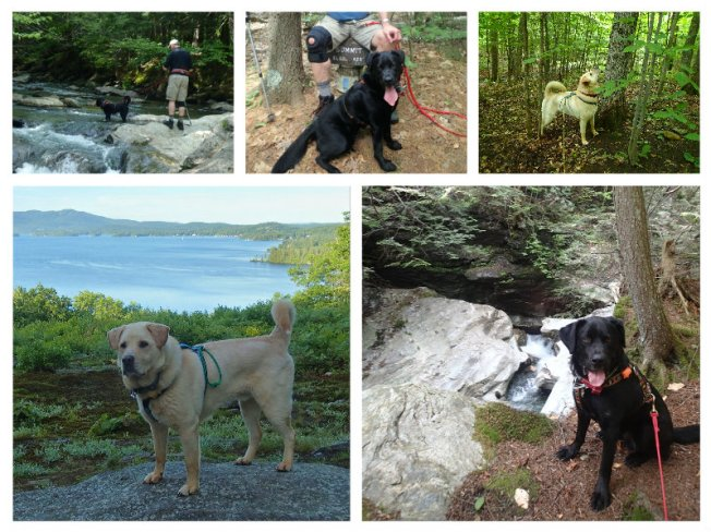 june dog hikes