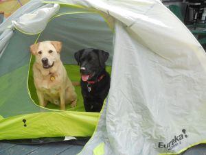 new tent 2