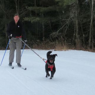 ski cricket 10
