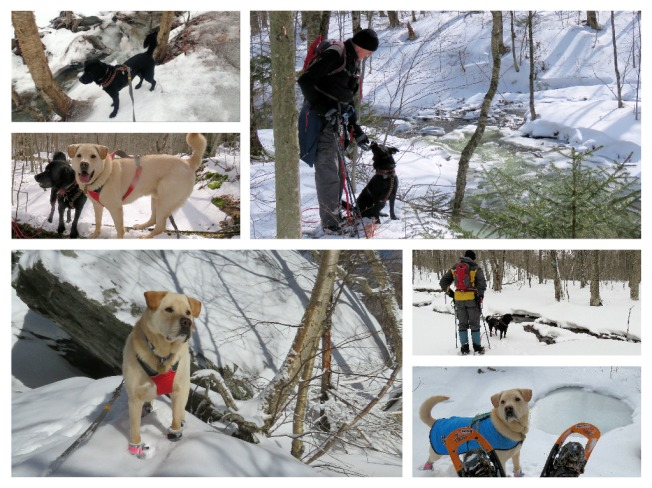snowy collage