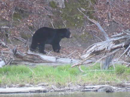 rez site 16 bear 4