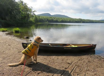 adk paddle 22