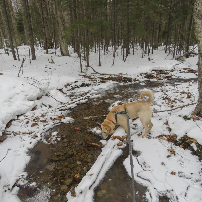 ADK 2017 March 29