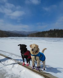 very cold wcsp 2 dogs 5