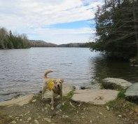 april grrsp paddle 24