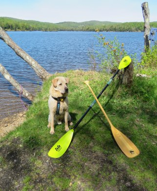 green river may camping 33