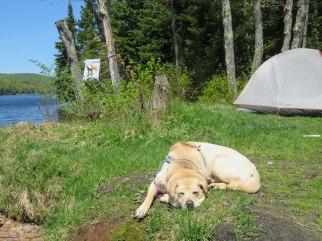 green river may camping 46