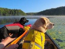 both dogs wolcott pond 17
