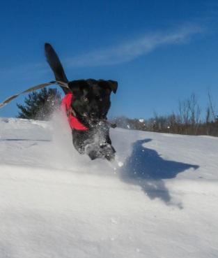 edgar leap in snow 3