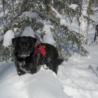 edgar blowing snow sterling 29