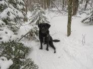 edgar nice january 2018 snsp snowshoe 15
