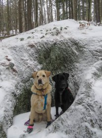 two dogs snowshoe sunset rock 10