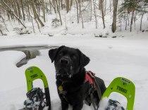 edgar february snowy mill trail 9