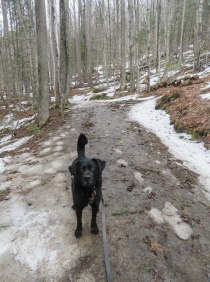 edgar spike yucky mill trail 3