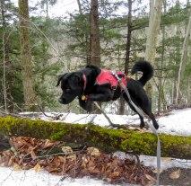 edgar spike yucky mill trail 7