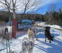 maine snowshoe trip 100