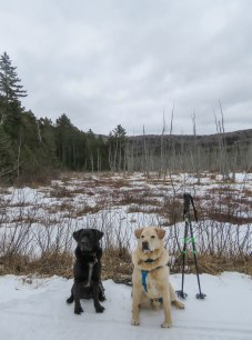 maine snowshoe trip 18