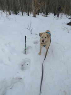 maine snowshoe trip 65
