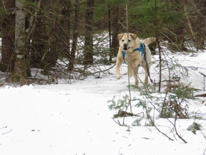 maine snowshoe trip 8