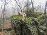 griff november foggy notch 17