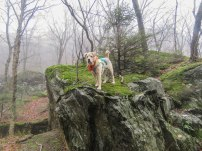 griff november foggy notch 17