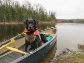 paddle4 1May wolcott 36