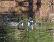 paddle6 6may GRRSP 33