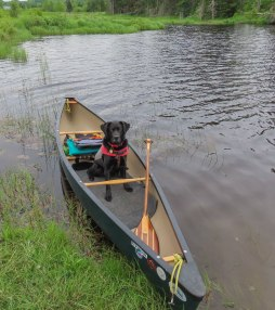 paddle34 wolcott moose 34