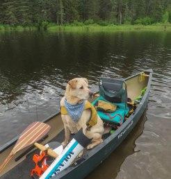paddle40 17