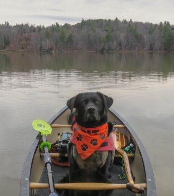 paddle164 10
