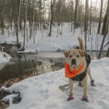 snowhike tplo mil trail 6