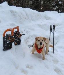 snowshoe47 15