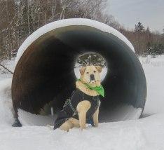 nulhegan winter 10