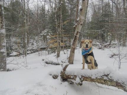 april snow mill trail 17
