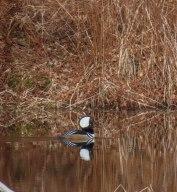 edgar hardwick and birds 16