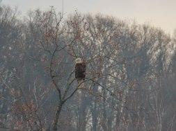edgar hardwick and birds 23
