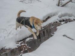 snowshoe94 36