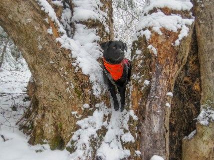 edgar raven hill 10